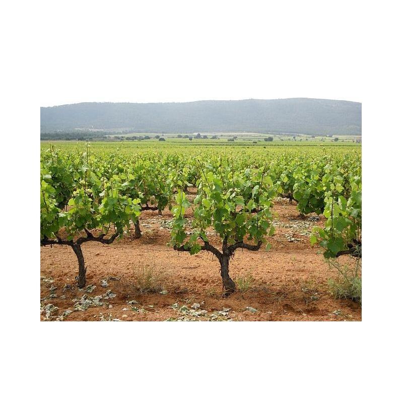 Valencia Spain Wine Tours