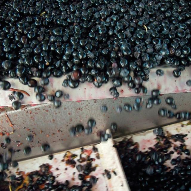 Private Wine Tour Utiel Requena