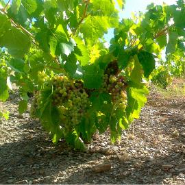 Priorat, paisaje y cultura de un vino extraordinario (3D2N)