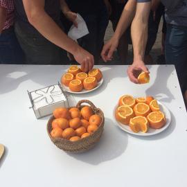 Visita Huerto de Naranjos