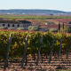 Private wine tour, the kingdom of Bobal