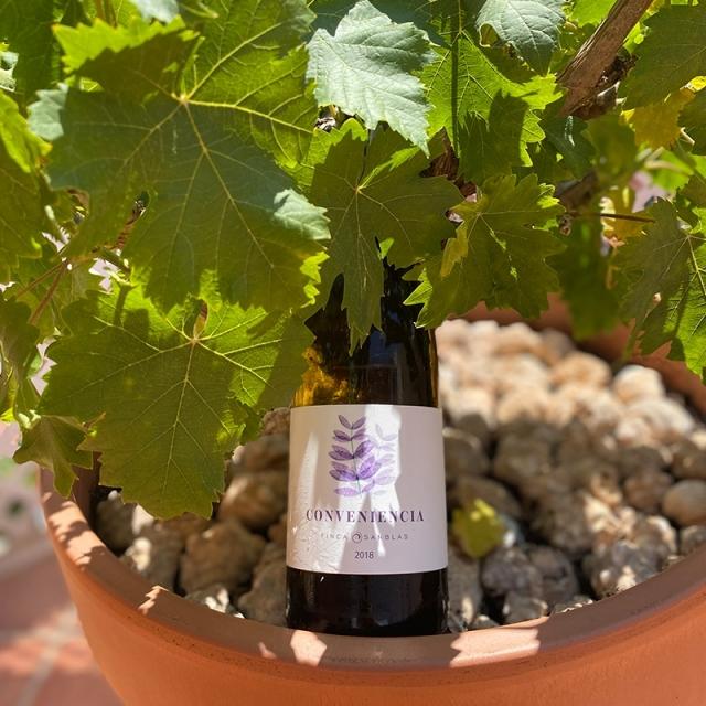VALENCIAN WINES TASTING
